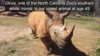 В начале марта этого года в зоопарке Северной Каролины, США, ...