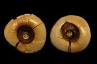 На севере Италии в регионе Тоскана археологи обнаружили два ф...